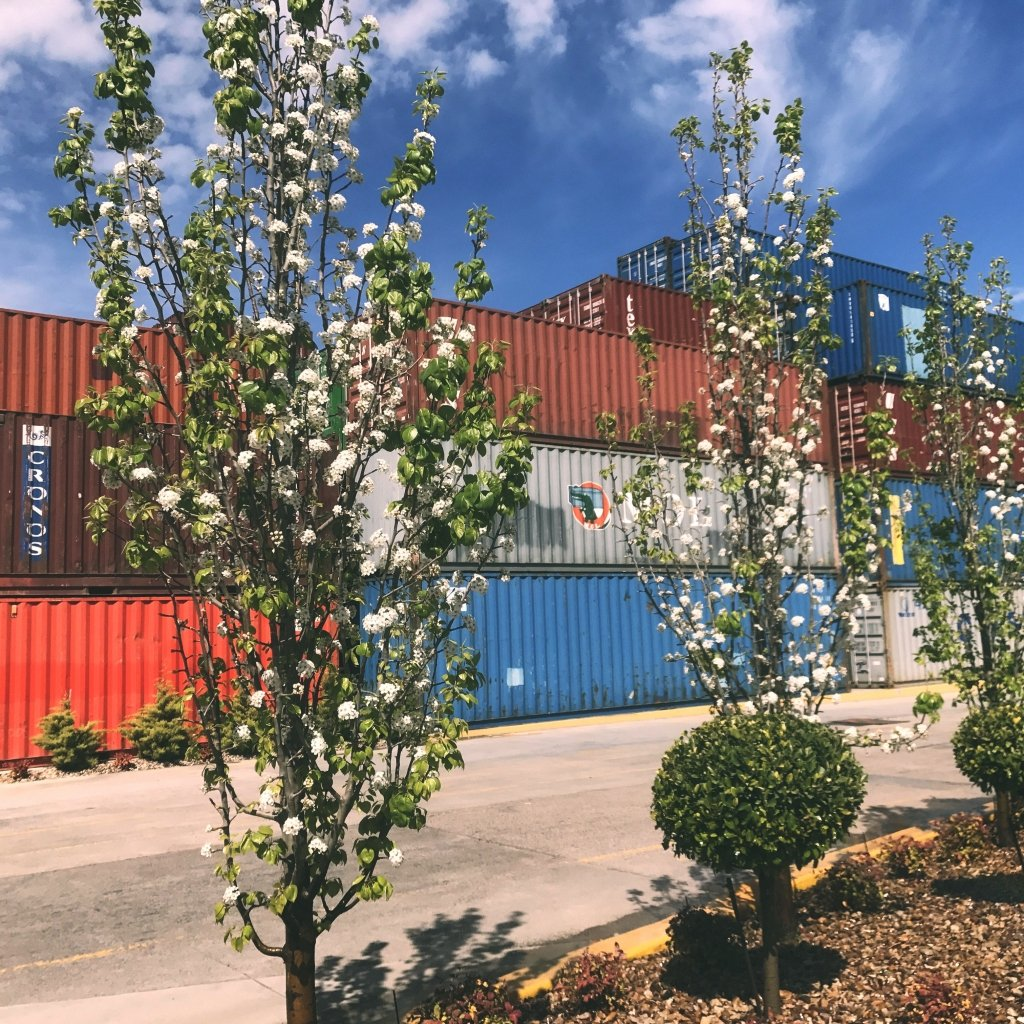 spring blooms against a stack of shipping containers